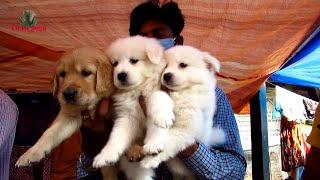 RECENT DOG PUPPY PRICE AT GALIFF STREET PET MARKET KOLKATA | CUTE DOG PUPPY | 22ND NOV 2020 VISIT