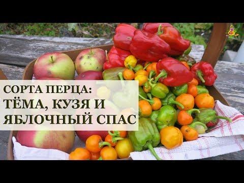 Перцы Тёма, Кузя и Яблочный спас / Огород в контейнерах / Ругаю фирму Поиск