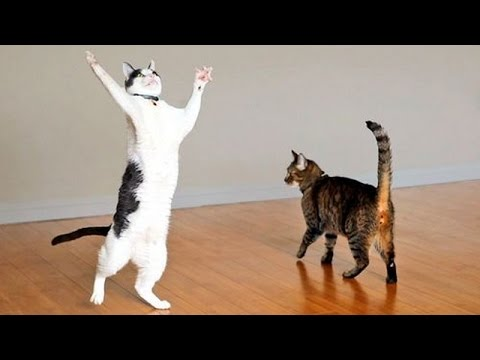 Thumbnail: Cats are the kings of animal comedy - Funny cat compilation