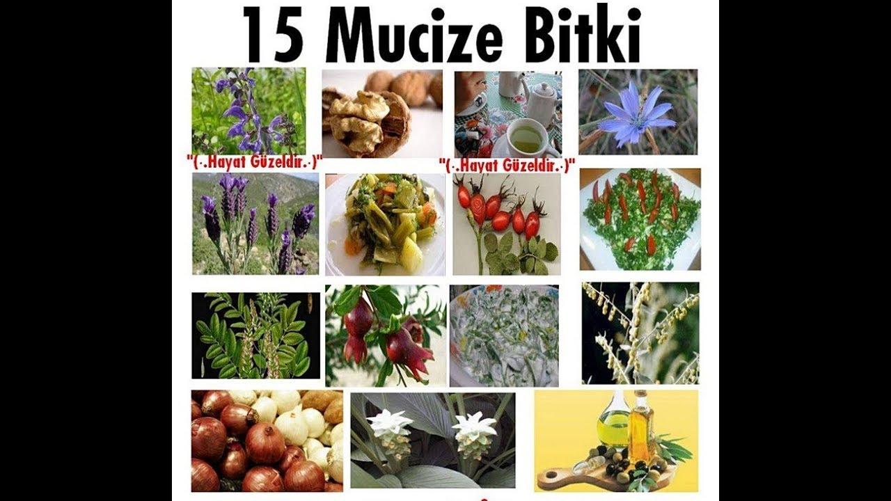 Bu 15 Bitki Mutfağınızda Olmalı