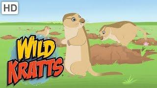 Wild Kratts - Holes   Kids Videos