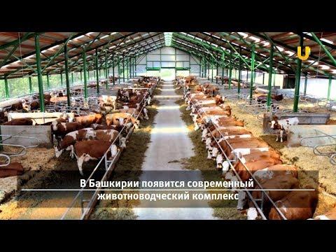 Новости UTV. Новости Давлеканово, Раевский за 14 декабря