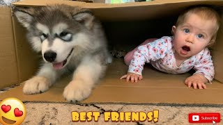 Puppy And Baby Play In A Box! (CUTEST EVER!!)