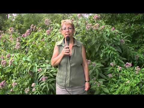 Josee Rollin talks about the Ottawa Freedom Centre