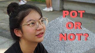 Do Thai people want to legalize marijuana? คุณคิดยังไงกับการทำให้กัญชาถูกกฎหมาย - Interview