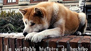 hachiko وفاء نادر / الكلب الذي ابكى الكثير