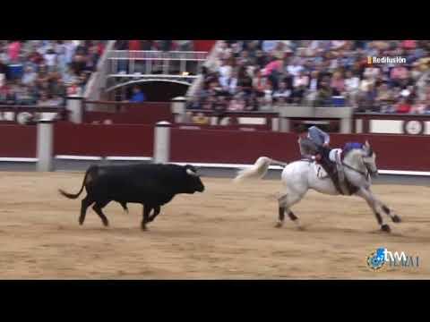 toros tvm de grana y oro 13-6-2018