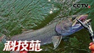 """《科技苑》 20190619 濒危""""水中猛虎""""人工驯  CCTV农业"""