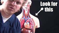 hqdefault - Back Pain After Pneumothorax