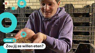 Meelwormen in je eten? Het mag vanaf nu