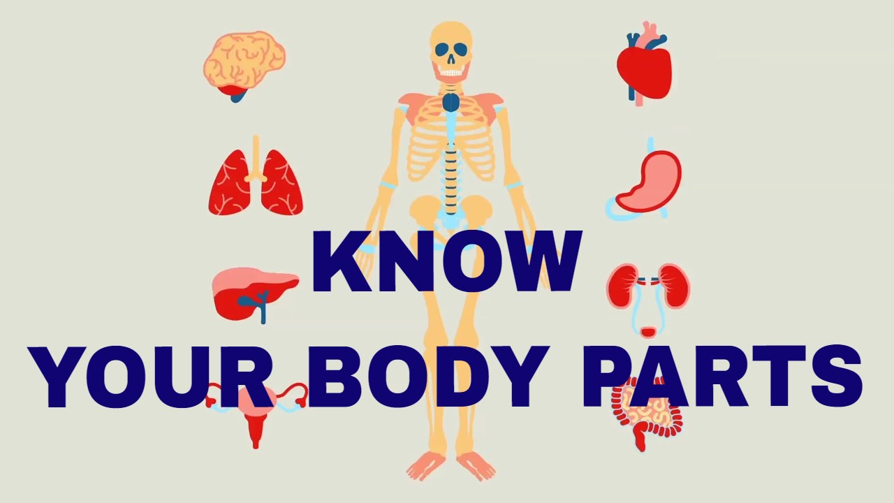 Body Parts for Kids Learning | Human Body Parts for Kids |General Knowledge  |Animated Video For Kids