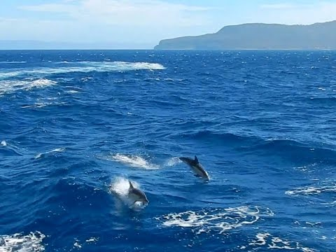 Coles Bay Cruise dolphins - Romancing the Globe Travel Blog