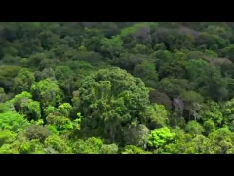 Amazon: The lungs of our planet by BBC