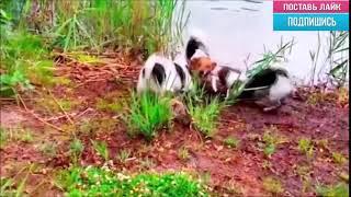 Кто в лес, кто по дрова!  - Эти Забавные Животные!!! / Видео
