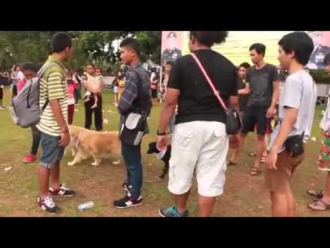 Dog Carnival Day Salatiga 01 Desember 2013