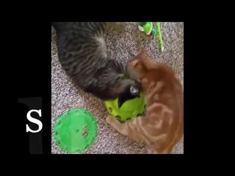 نسخة عن New Best Funny Videos & Vine Compilation 2016 KIDS,ANEMALS