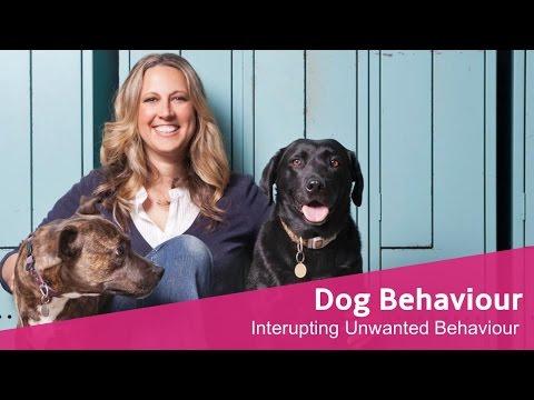 Interrupting unwanted behaviour in your dog