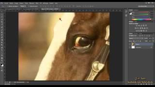 8 - جودة الصورة الرقمية ( دورة فوتوشوب  Photosop CS6 )