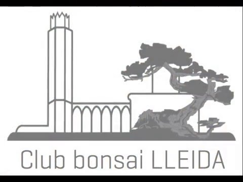 CLUB BONSAI LLEIDA Taller con Mauro Stemberger,  trabajo en tejo