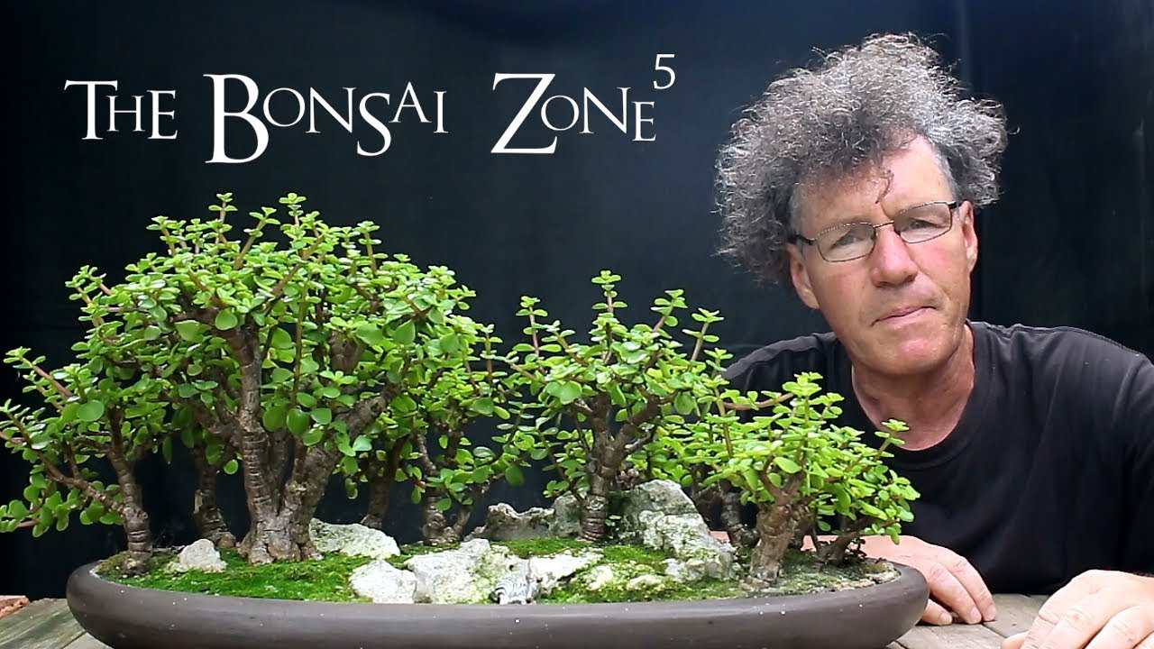 My Show Trees For This Year Part 3 The Bonsai Zone July 2018 Youtube