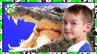 Крокодиловая ФЕРМА шоу КРОКОДИЛОВ ТАИЛАНД