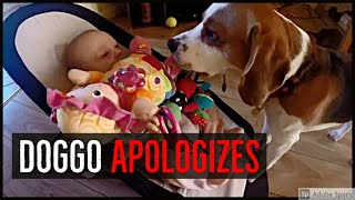 Guilty Dog Apologizes To Crying Baby Sister After He Steals Her Toy