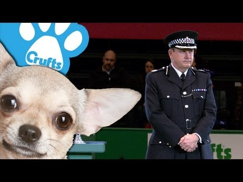 West Midlands Police Dog Unit Display - Part Two - Crufts 2013