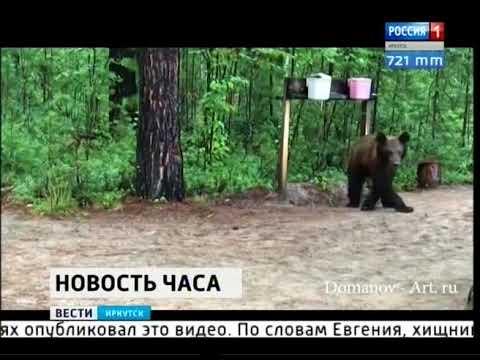Медведь забрёл в лагерь экспедиции во Фролихинском заказнике на северо востоке Байкала