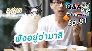 แมวฟังคำสั่งเรารู้เรื่องไหม?