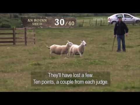 Michael Gallagher & Cap - Day 1 - International Sheep Dog Trial 2011