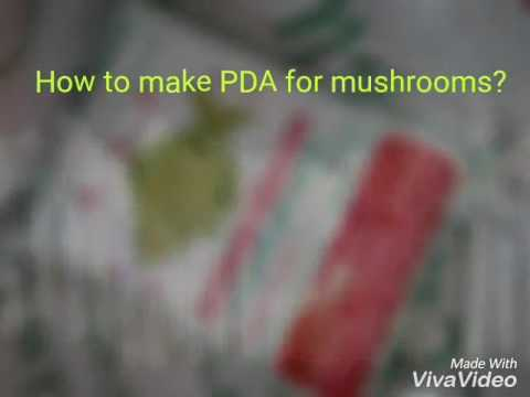 How to make PDA for mushrooms?