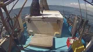 Day Trawl