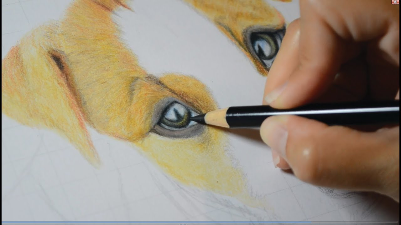 how to draw a dog s eye in colored pencil youtube