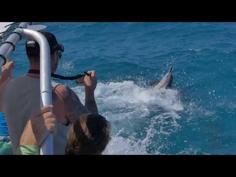 Tenia New Cal - Dolfins - Nov 2018 Adeline & Baptiste - teniaab  t98 30p  38mbs