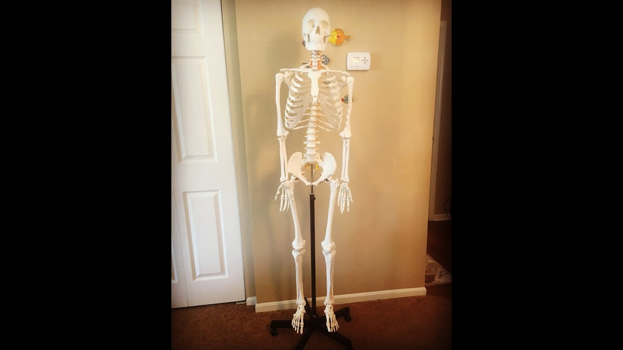 The Best Skeleton For Purchase On Amazon Youtube