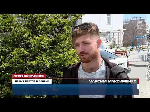 В Севастополе 25 туй и 45 чайных роз украсили дворы и скверы Гагаринского района