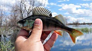 за пол часа ведро окуней рыбалка на реке урал