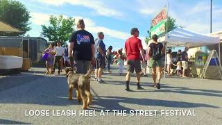 """Video Airedale Terrier """"Winston"""" 6 months old