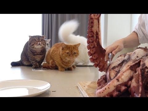 The day for cats to eat a gigantic octopus. (ENG SUB)