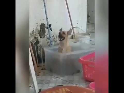 개가 춤을 춘다 a dog dancing in bath