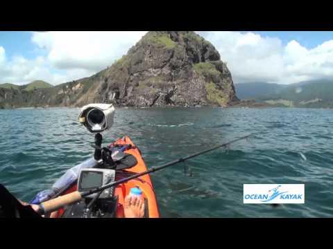 NZ Fishing  Kawai