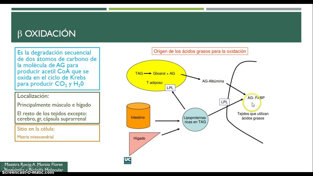 Digestión y Metabolismo de Lípidos 2a Parte - YouTube