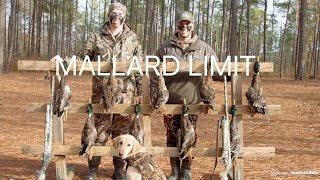 Duck Hunting South Alabama