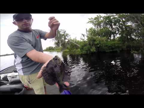 Bluegill Fishing The St. John's River, FL With Matthew Outlaw