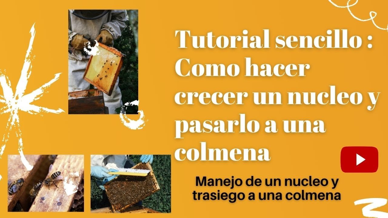 "APICULTURA: Traspaso de nucleo a colmena 👉 transfer core bee hives ""Como traspasar a una colmena"" 🐝🐝"