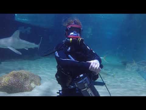 OCEANEARS Acoustic Communication System Test Dive Cleveland Aquarium