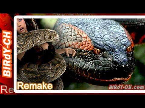 งูยักษ์ 10อันดับ สายพันธุ์งูที่มีขนาดใหญ่ที่สุดในโลก | Remake