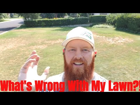 DIY how to repair lawn Patchy dead areas, brown dead grass,