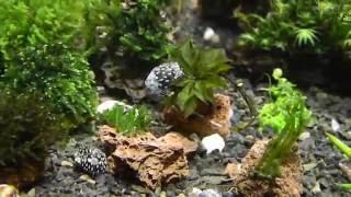 500 л. аквариум .более 100 видов буцефаландр  и не только !!!