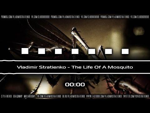 Vladimir Stratienko -